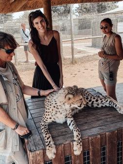 Kimbwe the cheetah